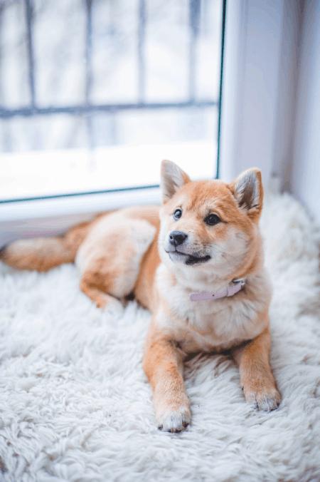 Hundehaftpflichtversicherung Häufigsten Schäden