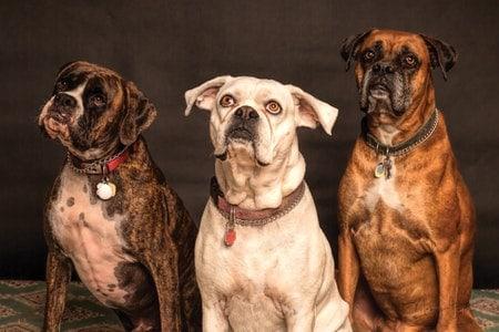 Hunde-OP-Versicherung für alte und kranke Hunde - geht das?