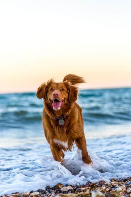 Hunde-OP-Versicherung: Für welche Hundehalter lohnt sie sich?