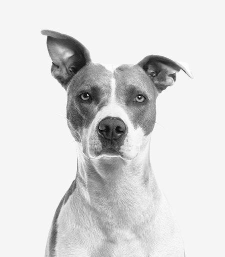 Hundekrankenversicherung: Für wen lohnt sie sich?