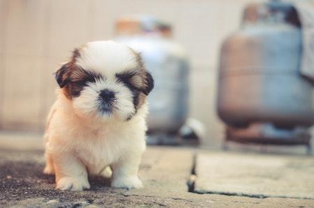 Hundekrankenversicherung: Was kostet eine Hundekrankenversicherung und lohnt sie sich?