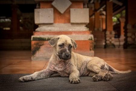 Hundekrankenversicherung: Was gibt es bei Vorerkrankung zu beachten?